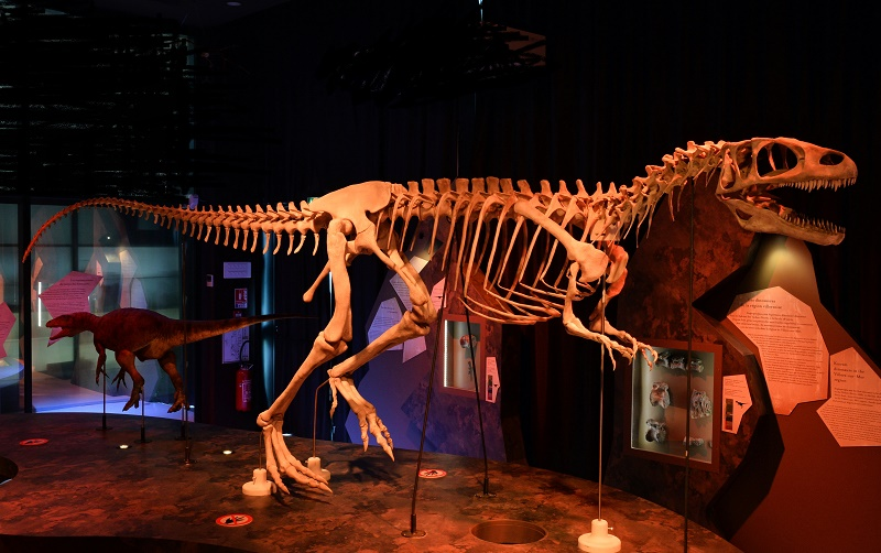 Visite Guidée ''Dinosaures''