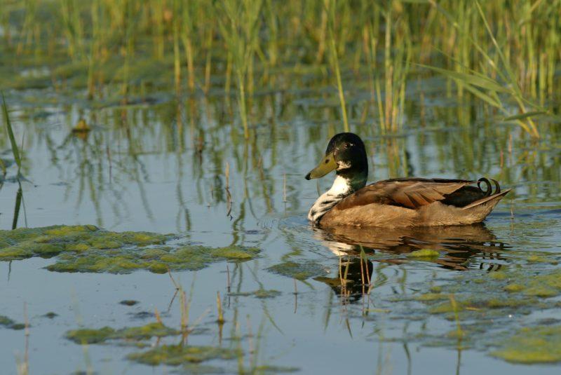 Balade Nature entre Marais et Plage